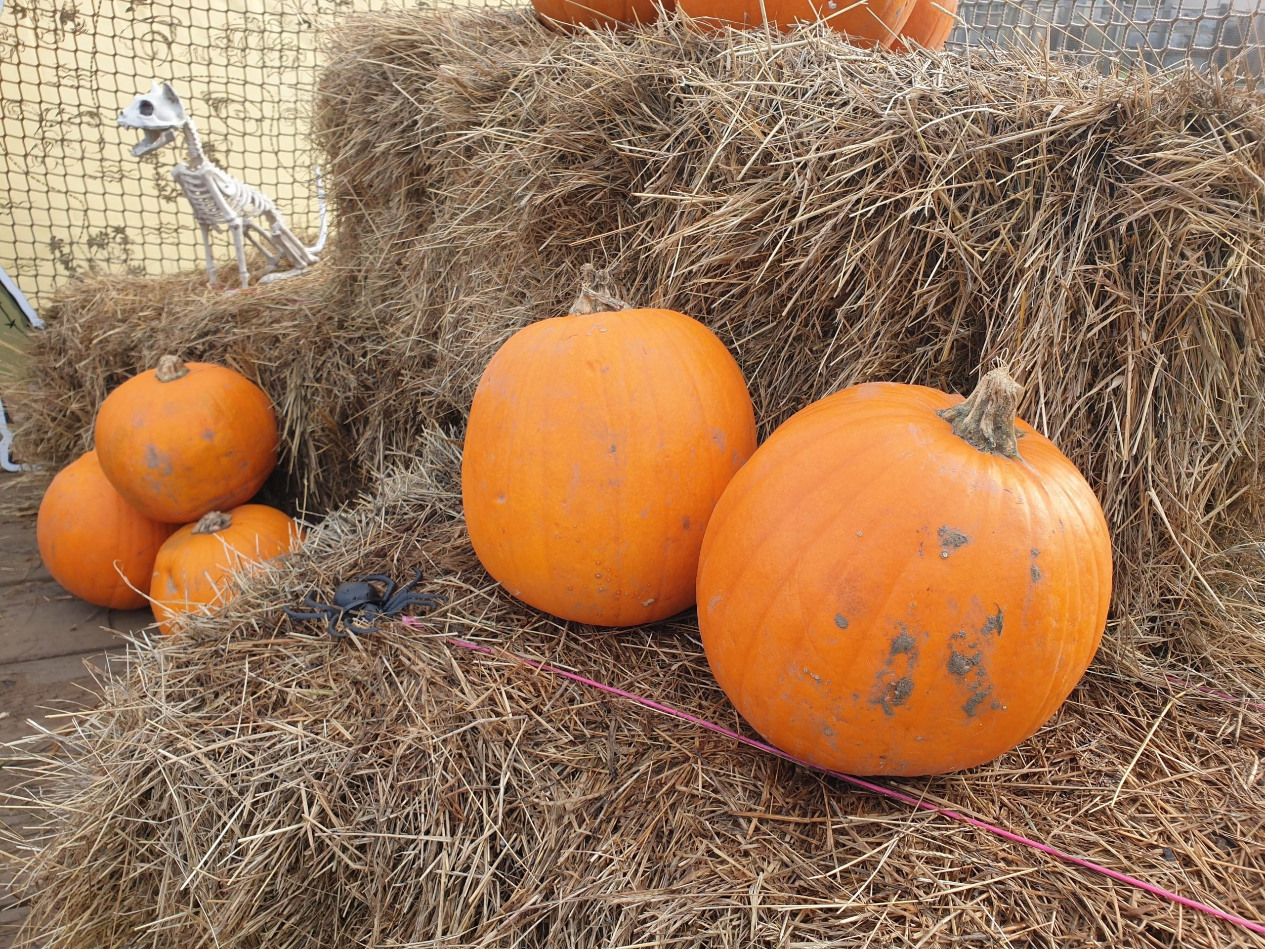 Halloween pumpkin display on decking area